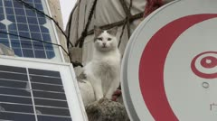 Cat sits in the middle of a satellite dish and solar panel, in front of a yurt Stock Footage
