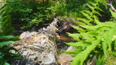 Mountain Stream - stock footage