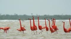 Pink flamingo mexico wildlife birds Stock Footage