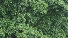 Very heavy rain, wind blowing leaves. - stock footage
