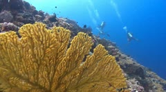 Yellow fan to divers fast Stock Footage