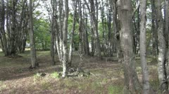 Patagonian forest s Stock Footage