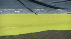 Lined holding pond algae sludge, zoom, #2 Stock Footage
