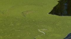 Lined holding pond algae sludge Stock Footage