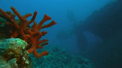Shipwreck´s propeller and sponge, red sea Stock Footage