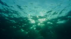 water surface, underwater shot, sun in center - stock footage