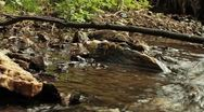 Stock Video Footage of stream in a wood