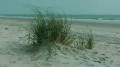 Beach landscape south carolina Stock Footage