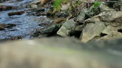 Stream in a wood Stock Footage