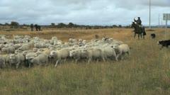 Patagonia herding sheep 2. - stock footage