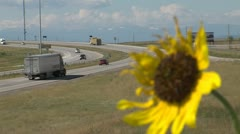 Sunflower on Wyoming Interstate Highway Stock Footage