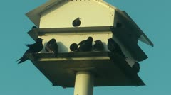 Martin house full of birds Stock Footage