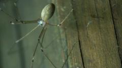 spider blood pumping through her veins - stock footage
