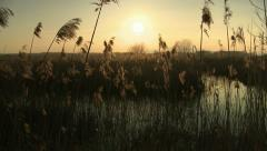 Marsh sunset - stock footage