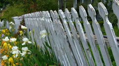 Old White Pickett Fence With Flowers - stock footage