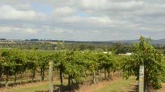 Healesville Australia sunset at large St Huberts Winery in wine area of Victoria Stock Footage