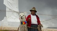 Stock Video Footage of cuzco cusco peru traditional woman with colorful clothes and llamas in religi