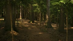 slow motion steadycam creepy forest - stock footage