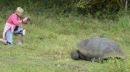 Galapagos islands ecuador tourists relating to giant tortoises on santa cruz  Stock Footage