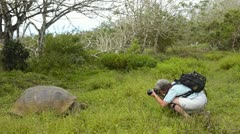 galapagos islands ecuador tourists relating to giant tortoises on santa cruz  - stock footage