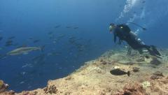 Stock Video Footage of Shark and SCUBA Diver Tourist