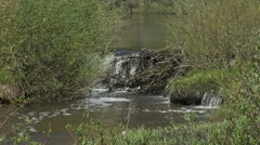 Small Beaver Dam Stock Footage