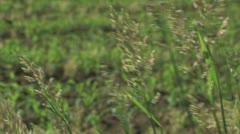 Farm Field Pan - stock footage