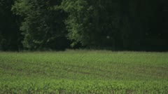 Tractor Spraying in the Field Stock Footage