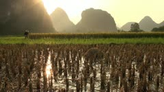 Beautiful sunset over rice fields and karst scenery in China Stock Footage