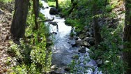 Stock Video Footage of Little Creek In Mariposa California