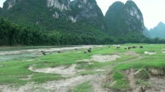 Buffaloes amidst karst scenery Stock Footage