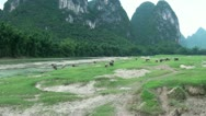 Stock Video Footage of Buffaloes amidst karst scenery