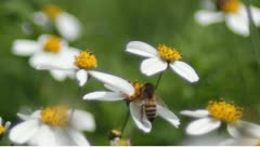 Pollination 1 Stock Footage