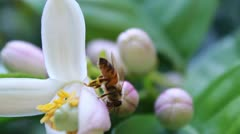 Pollination 2 Stock Footage
