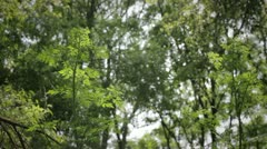 Woodland Pollen - stock footage