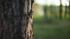 Woman hand and tree bark Stock Footage