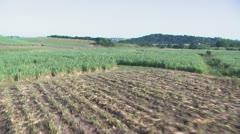 Sugar Cane Aerial Stock Footage