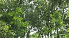 Woodland Pollen 2 - stock footage