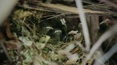 Baby Wrens Feeding - stock footage