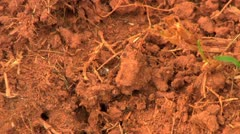 Fire ants on the ground Stock Footage