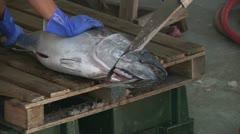 Big Eye Tuna Ahi Commercial Fishing Wild Caught Market Preparation Job Work Food Stock Footage
