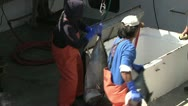 Stock Video Footage of Big Eye Tuna Ahi Commercial Fishing Wild Caught Market Preparation Job Work Food