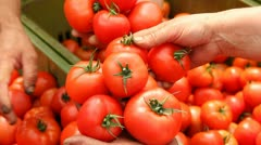 Tomato in a Greenhouse Stock Footage