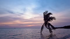 Sunset on the beach with palm tree silhouette @ Koh Phangan, Thailand - stock footage