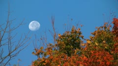 Autumn moon and trees in the wind Stock Footage