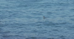 A cormorant diving into the sea in slow motion 2K Stock Footage