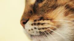 Cat nose macro Stock Footage