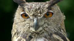 HD1080 Eagle Owl Close Up (bubo bubo) Stock Footage
