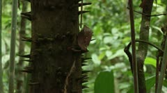 Brazil: Amazon flora 1 Stock Footage