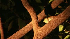 Brazil: searching for frogs in  night 2 Stock Footage